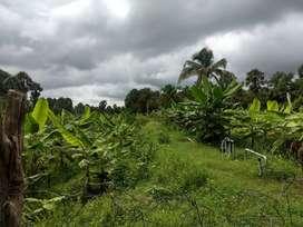 1.75 Acre Farm land for sale at Palakkad, Kerala