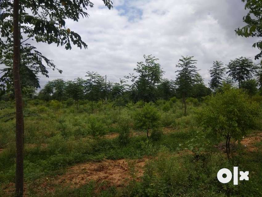 Lands & Plots for sale at bhongir with all Documents with Plantation 0