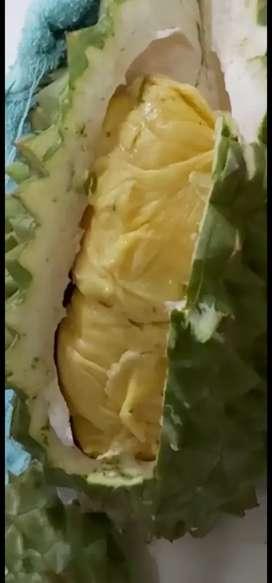 Durian Utuh Montong