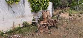 Teakwood Logs for sale