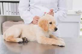 Dog vaccination and health services for Home