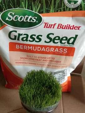 Benih rumput bermuda scotts grass - benih rumput golf