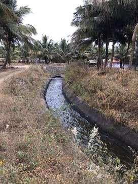 Coconut farm 1 acer vaikal base.agricultural land(944/260/59/63)
