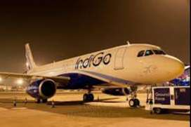 job in indigo airline apply fast