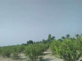 10 ACRES ARMY ALLOTTED AGRICULTURE LAND