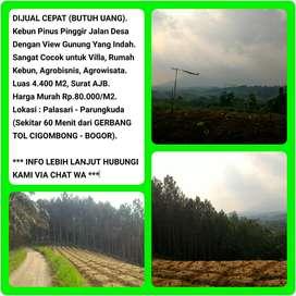 Dijual Cepat (BU) Tanah Kebun Pinus View Indah, Luas 4419m2