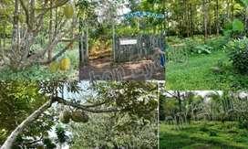 Tanah semarang cocok unt private resort N cafe suasana alam dekat bsb