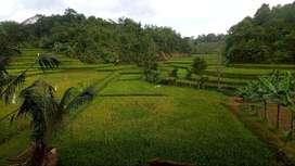 Tanah Sawah Pinggir Jalan 1400 m2 di Darangdan Purwakarta Dijual Murah