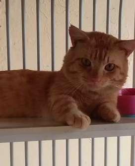 Lepas adopt kucing munchkin