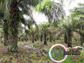 Tanah Dijual SHM Murah 1 Hektar