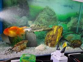 Aquarium for Sale with Fishes
