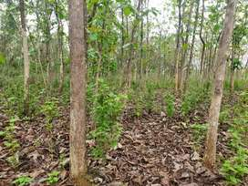 1.2 ACRE TEAK PLATATION IN ODISHA