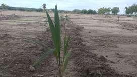Premium Farm land