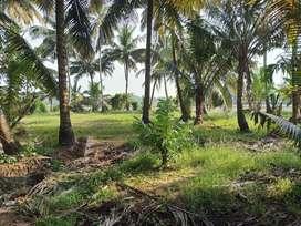 80 cent plot for sale in Kainakary.