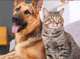 Panggilan Mandi Kucing Anjing ke Rumah