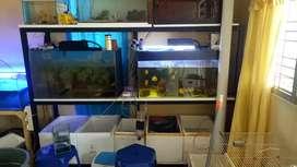 rak besi + aquarium