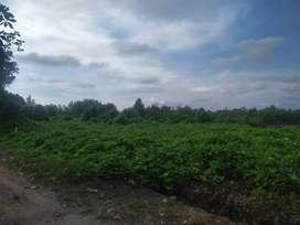 Tanah Hamparan SHM