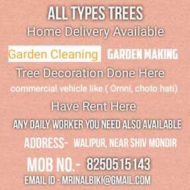 All plants home delivery available.