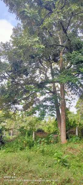 Jual kebun durian lokasi Jumantono luas 5500m hrg 700rb/mtr nego