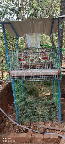 High teck chicken cage