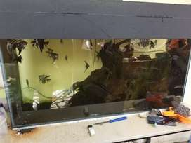 aquarium manfish