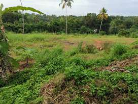 Nedungadappally 1 acre 25 cent land at Shantipuram