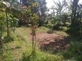 Tanah Kawasan Villa Ada Air Mengalir Wanayasa Purwakarta Dijual Murah