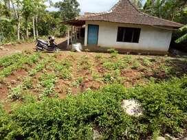 Tanah murah,cocok buat kebun buah dikerjo,karang anyar
