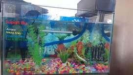 Aquarium kaca 5mm ukuran 50x30x30