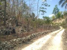Tanah murah untuk investasi di Sumberwungu Tepus Gunungkidul