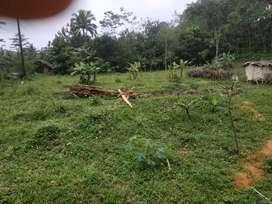 Tanah dijual luas 240 ubin