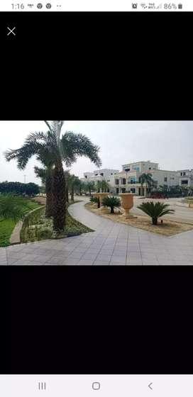Township Buy plots kisa path,faizabad Road,