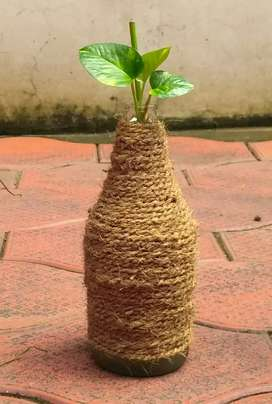 Coir worked glass bottle with money plant
