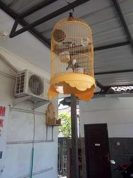 Dijual burung lovebird sepasang beserta sangkarnya