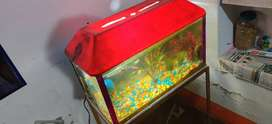 Medium size aquarium with  lid