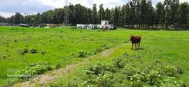 200 sq yard plot only in 15.00 Lacs . 6 km from ONGC Chowk.