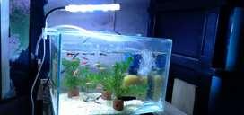 Aquarium sett borongan