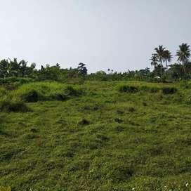 Di jual murah tanah di rajeg 200 ribu/ meter nego sampai deal