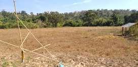 Dream Land Project (Rangat)