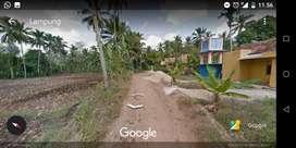 Jual Tanah 3000+ meter bonus poho kelapa