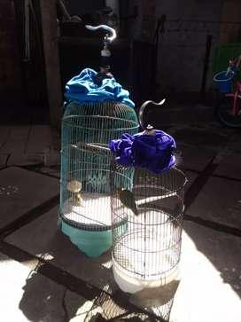 ...  Dijual fullset... 450 -kenari loper gacor -lovebird .