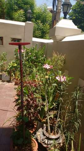 Green plants, Flowers, Horticulture, Garden