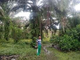 Tanah lahan sawit dan lahan rumah