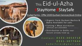 Farm Wala Bachra and Bakra for sale in low cost