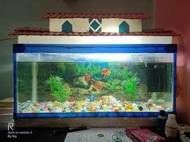 Aquarium Large Size