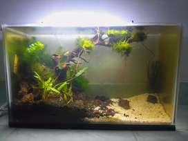 Aquarium full sett