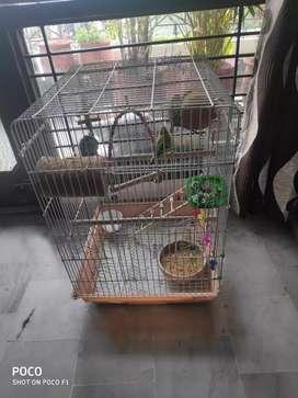 bird big cadge