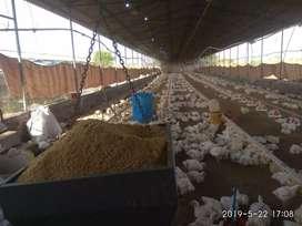 Poultry farm sade bechna hai
