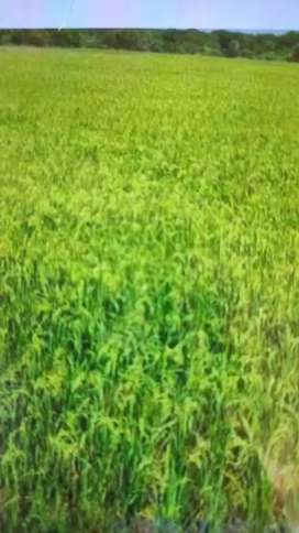 6 Acers of agriculture land is for sell