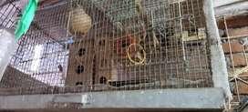 Big Cage 18 hight
